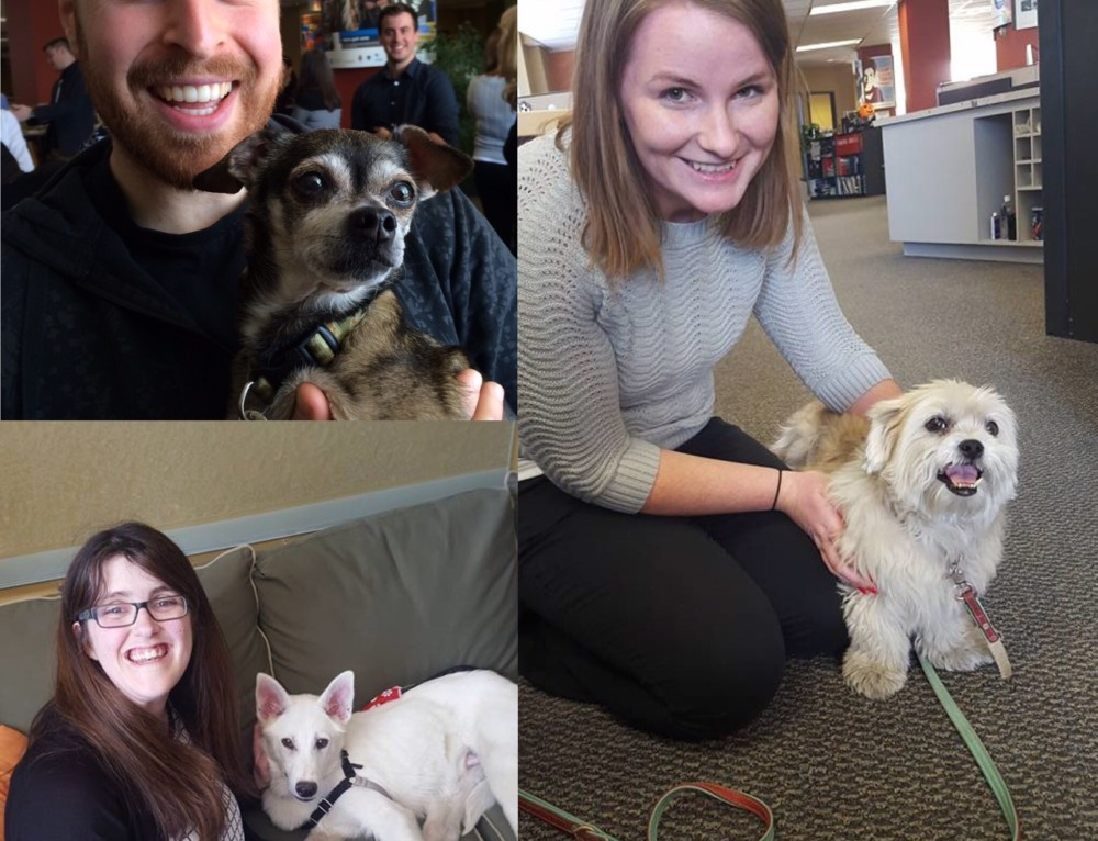 Unleashing the Fun on Take Your Pet to Work Day!