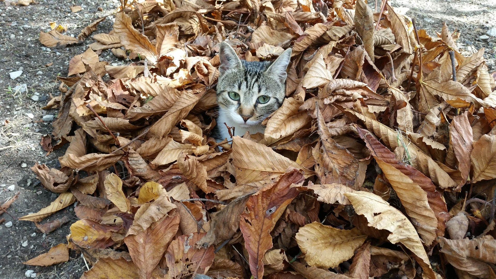 Fall Tips to Keep your Pets Safe
